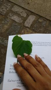 RSS Leaf