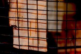 Chris Turnbull frame-wire-birch-bark